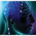 Thin brain