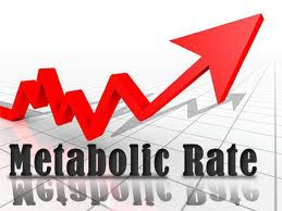 metabolism-image